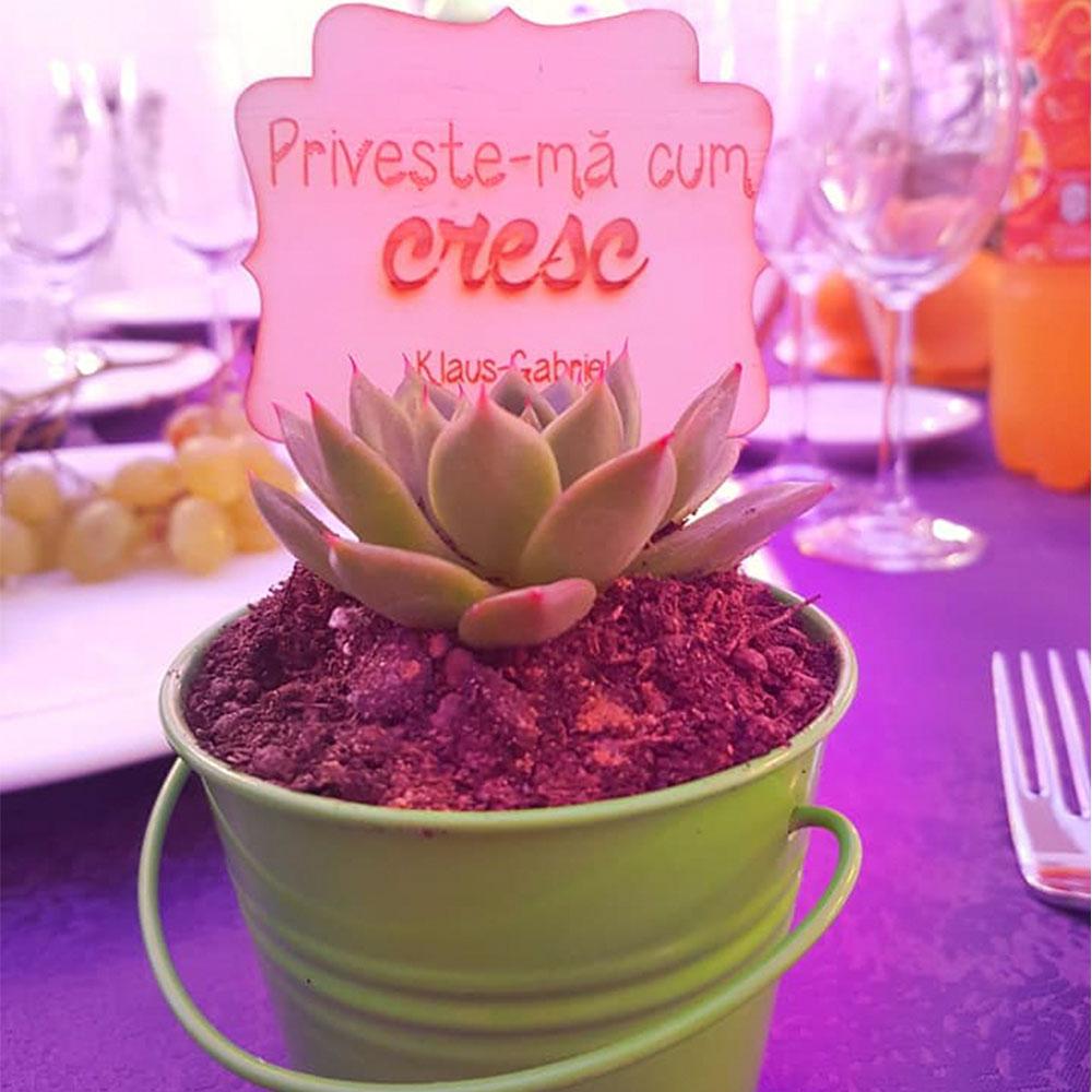 marturie nunta botez planta suculenta personalizat